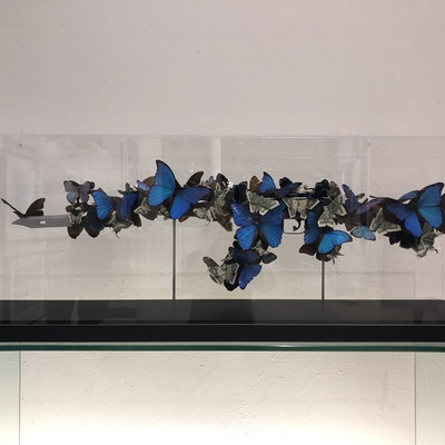Blue Butterflies & Dollar Bills by Bran Symondson