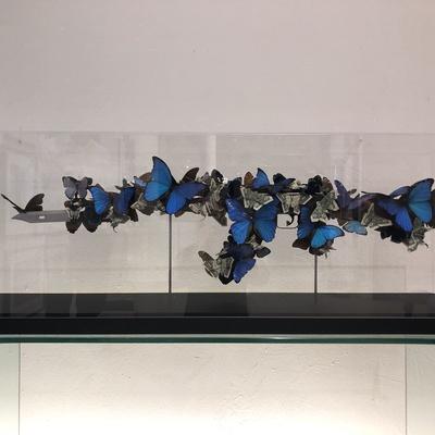 Blue Butterflies and Dollar Bills by Bran Symondson