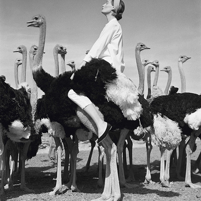 Wenda and Ostriches by Norman Parkinson